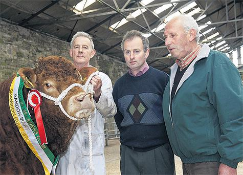 The champion Limousin at the bull show and sale in Bandon Mart, Cork - Clontead Endevor - with owner Eustace Burke, Carrigaline; show judge Tim McCarthy, Ballydehob; and Donal Kelly, mart chairman