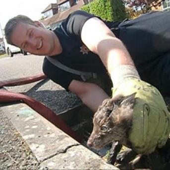 Firefighter Tom Maslin helps rescue a fox cub from a drain