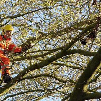 Storm the Harris Hawk is rescued by a Dorset firefighter after becoming entangled by its tether