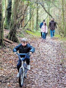 Coillte have excelled at creating access to their woodlands, such as at Colonel's Woods, Knockranny, Westport, Co Mayo, where visitors can enjoy signed walks and other open air pastimes