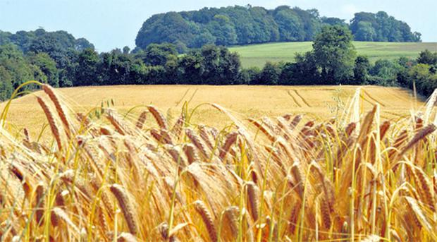 In order to qualify for the leasing income exemption, the land must meet the special definition of farmland as outlined in the tax legislation