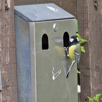 A great tit has built its nest in a cigarette bin at the RSPB's Fairburn Ings nature reserve in Castleford, West Yorkshire