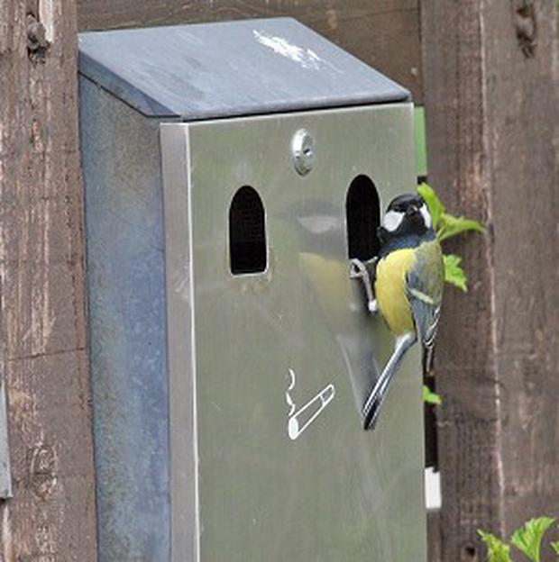 Smokers in a flap over ashtray bird - Independent ie