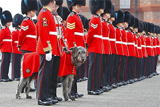 The Irish wolfhound mascot lines up with the Irish Guards