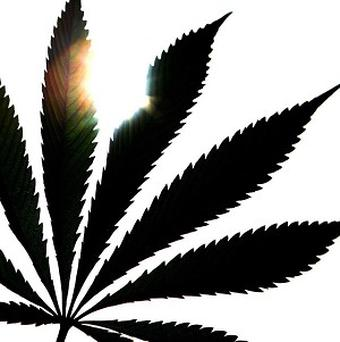 The grandmothers have been arrested over a cannabis factory in the US