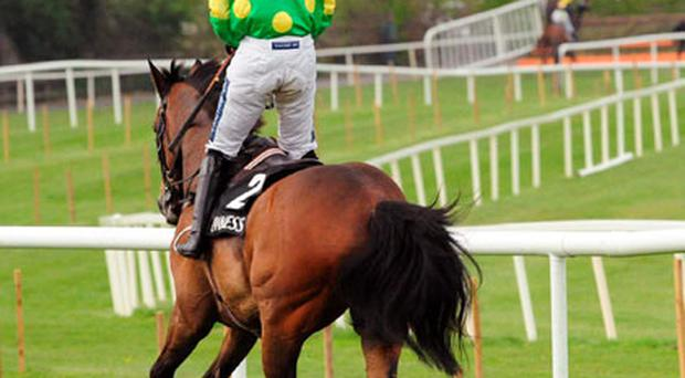 Ruby Walsh pulls up a tired Kauto Star four fences from the finish of the Punchestown Guinness Gold Cup. Photo: Healy Racing