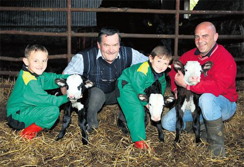 May Day triplet calves born on the Dwyer family farm at Moyadd, The Swan, Co Laois. With the two heifer and one bull calves are Seamus Dwyer with his son-in-law PJ Kelly and grandsons Jamie and Jeremy Kelly
