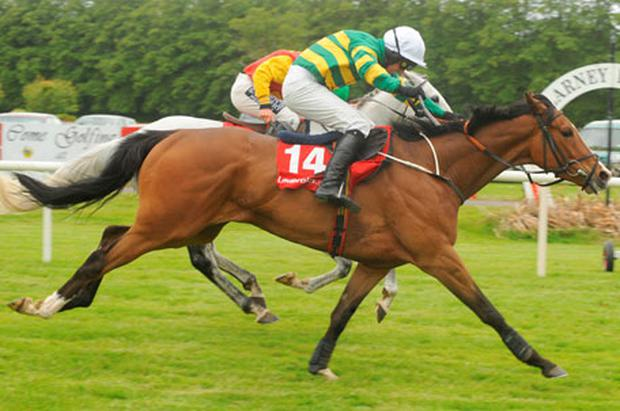 Princeton Plains (No 14), under Niall Madden, edges out Idarah at Killarney. Photo: Healy Racing