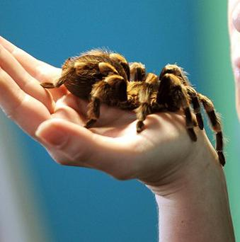 A German has been jailed for six months for posting hundreds of tarantulas to the US