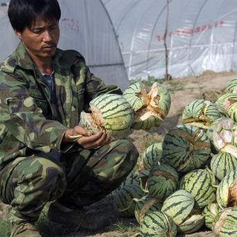 A farmer holds two exploded watermelons in Zhenjiang city, Jiangsu province (AP)