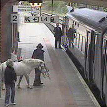 A rail passenger - with his pony - attempts to board the 1902 train service from Wrexham to Holyhead on Saturday (Arriva Trains Wales)