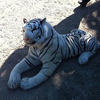 The toy life-size tiger which sparked a major operation involving armed officers and a force helicopter (Hampshire Constabulary/PA)