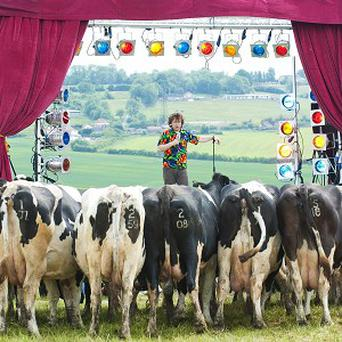 Comedian Milton Jones performs to an audience of cows
