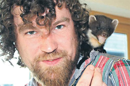 Jason Searle with the rare pine marten which he rescued from the side of the road near his Co Westmeath home