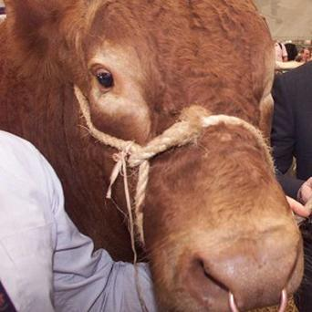 A 10-year-old boy saved his father from an attacking bull
