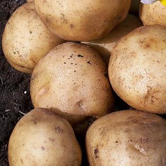 Potatoes from a lorry involved in a crash with a freight train are being used to feed needy families in Delaware