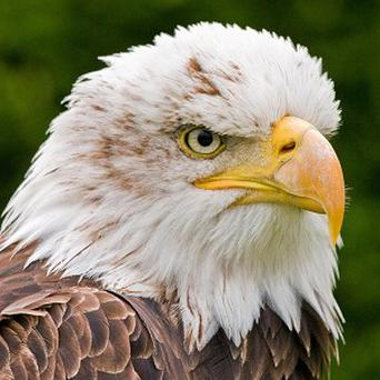 US vet Jeff Cooney performed life-saving CPR on an injured bald eagle that was under anaesthesia during physical therapy