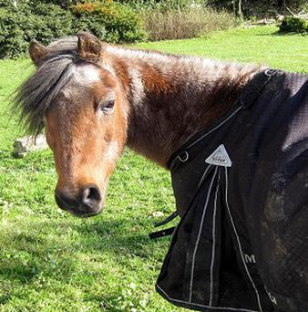 Tony, one of the country's last surviving pit ponies, has died of old age