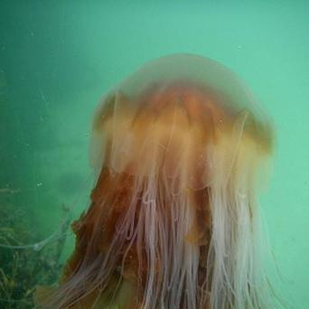Holidaymakers have been advised to use seawater or vinegar as a quick pain-relief method if stung by a jellyfish