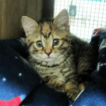 Princess the kitten survived a 50-minute washing machine cycle (Vets Now Emergency Clinic)