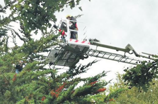 Fire crews in a hydraulic lift attempt to reach the 5 -year-old boy who climbed 30 feet into a tree outside Ennis, Co Clare, yesterday and was unable to get back down
