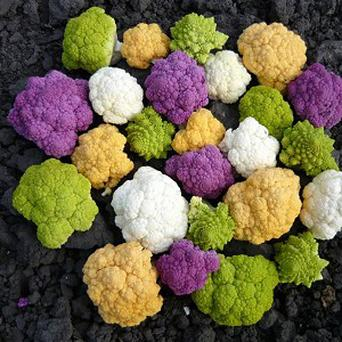 Cauliflowers which will be sold in a 'rainbow pack' exclusively for Tesco