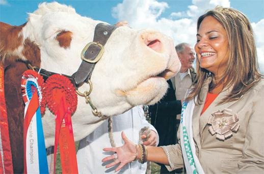 Sherine Prendergast, Macra na Feirme Queen of the Land, meets Fearna Tiffany who won the overall champion Simmental at the 2011 Tullamore Show and AIB National Livestock Show