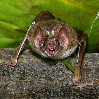 A bat flew inside the airplane's cabin sparking a rabies scare