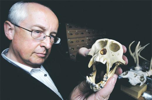 Nigel Monaghan holds a monkey's skull – with braces – at Dublin's Natural History Museum yesterday