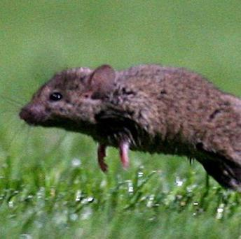 A Nepal Airlines flight was cancelled after cabin crew spotted a mouse in the plane's pantry