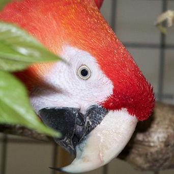 A parrot helped catch a burglar by squawking a warning to his owner