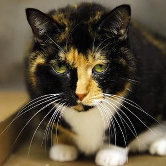Willow the cat that went missing from her Colorado home five years ago (AP)