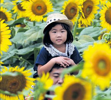 A little girl sits on her dad's shoulders at a sunflower festival near the tsunami-hit region of Tohoku