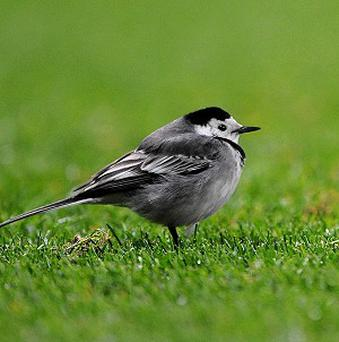 Study finds bird songs linked to brain structure