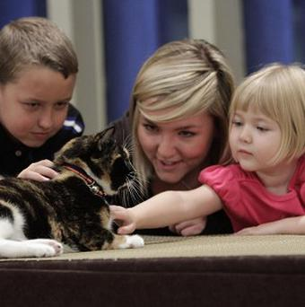 A cat that went missing in Colorado five years ago has been reunited with its owners after it was dropped in a shelter in New York City