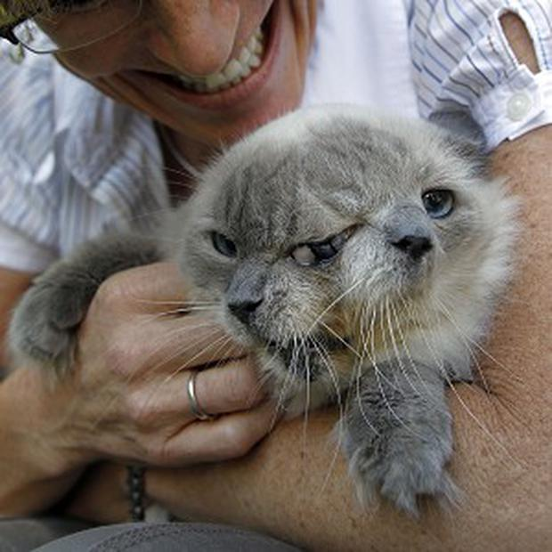 Frank and Louie, a cat with two faces and three eyes, is held by its owner Marty Stevens (AP)