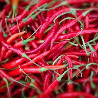 Two people became ill after taking part in a charity 'world's hottest chilli' competition