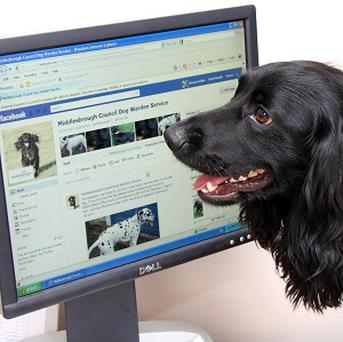 Zak the dog looks at the Facebark site which contains pictures of pets that have been found (Middlesbrough Council/PA)
