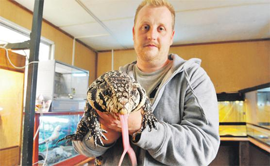 Kevin Cunningham, of the National Exotic Animal Sanctuary, with an Argentinian black and white tegu