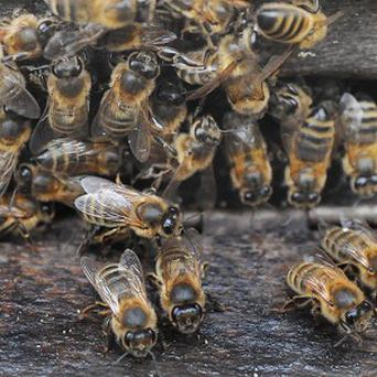 About 25 million bees caused havoc on Interstate 15 in Utah after a lorry crashed