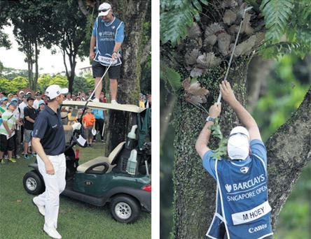 Michael Hoey looks on as his caddie looks up a tree for a lost ball on the 18th fairway