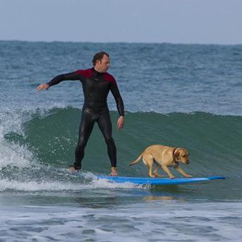 Matt Slater and his two-year-old Labrador Mango enjoy a spot of surfing in Cornwall