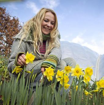 Eden Project horticulturist Emma Gunn with the early flowering daffodils in front of the world-famous Biomes