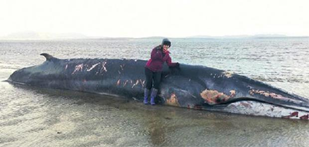 A woman stands beside the whale carcass at Raughley in Co Sligo