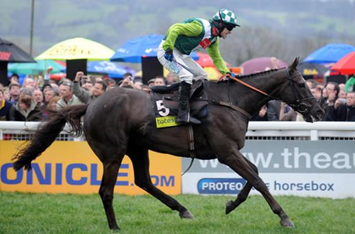 Jockey Sam Thomas on Denman after winning the 2008 Cheltenham Gold Cup. Photo: Getty Images