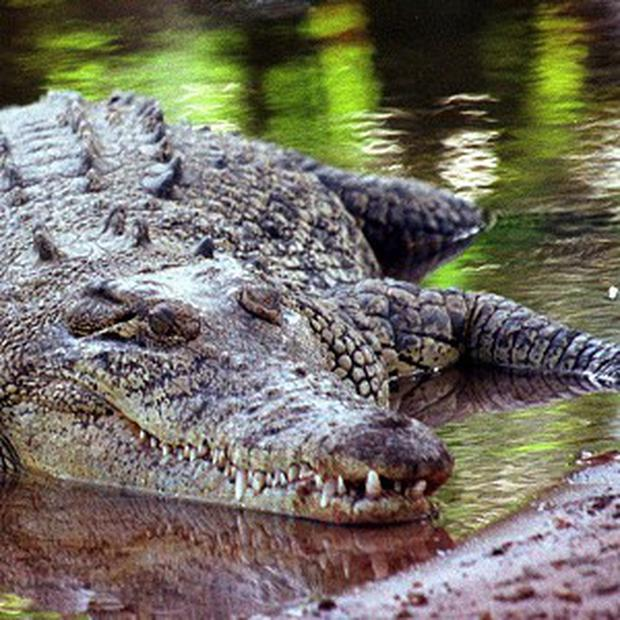 Staff at an exotic animals learning centre have condemned the owner of a young crocodile who dumped the reptile outside the premises