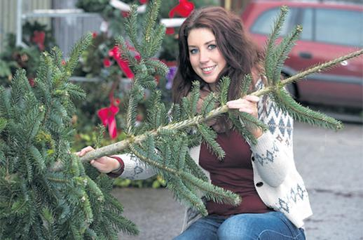 Katie Brosnan collecting her Christmas tree from Belfield Christmas Trees in Tralee yesterday