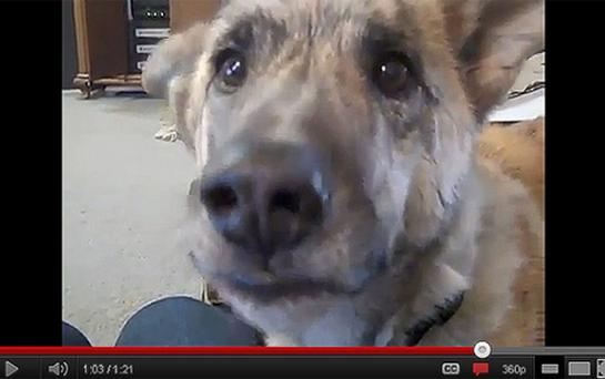 'Dog Tease' was the most watched video on YouTube during 2011 in the UK