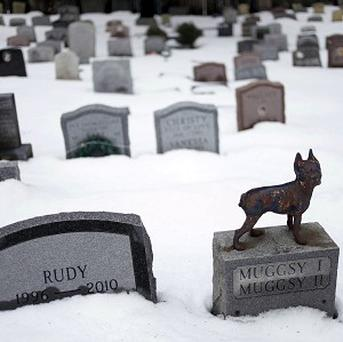 The New Yorks state has issued regulations that will once again allow pet owners to be buried with their pets (AP)