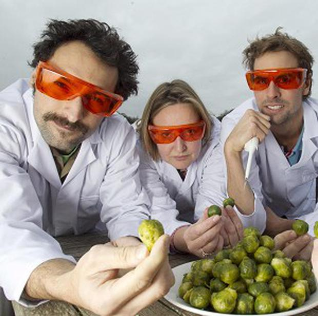 Scientists are trying to work out why so many people dislike Brussels sprouts (James Ram)